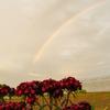 浜ちゃん日記  久しぶりの雨降りと虹