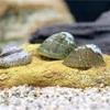 水槽のコケ問題は『フネアマ貝』で解決!特徴や飼育方法やの紹介!