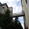 昭和通りを三ノ輪方面へ……安井屋で久々に豚まんを買いました!