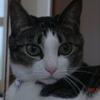 キメ顔おネコさま。