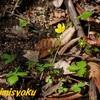 春といえば黄色の花-316.ツルキンバイ-