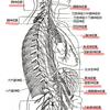 【首8】チャクラは神経叢と内分泌腺の位置にほぼ一致するの?
