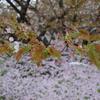 京都旅行記-2日目 寒くて雨なのでやる気をなくす