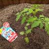 夏野菜を植える!🍅🥒