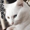 女子猫の謎