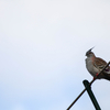 初めての野鳥撮影!!!