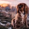 犬やペットと一緒に行く旅。カーフェリーも選択肢に入れてみようか