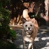 🐕Z 50(Nikonのミラーレス)動物AF、高速連写試験②📸