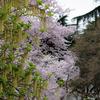 桜を背景に・・・