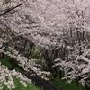 【満開】佐木島・塔ノ峰千本桜と尾道・千光寺