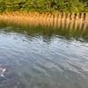 2021.5.24 相模川