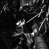 OLYMPUSのコンデジ 「XZ-10」で2017年7月16日までに撮影した写真を紹介します。桃の実がなっていました【虫注意】