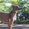 初めての犬旅行。犬と泊まれる温泉宿へ <準備編>