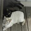 虹の橋のたもとの子どもたち 3部Part1 ~名なしの猫~