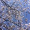 シングルマザーになって初めてのお花見は、簡単&お手軽にして大正解だったハナシ