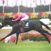 2月10日「共同通信杯(GⅢ)」登録馬と好走条件
