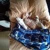 コロナであろうとなかろうと、変わらぬ猫ちゃーの1日