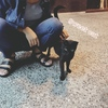 猫とお知り合いになるには。