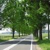滋賀県「マキノ高原」にきたら、「温泉さらさ」と「メタセコイア並木」は最低限訪れたい!その理由とは!?