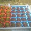 【雨も止んで絶好の撮影日和です】新しく加わる野菜たちを紹介します!「家庭菜園日記3日目」