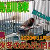 錦華鳥YouTube動画『放鳥訓練』を公開しました!