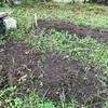 【畑】裸足で畑をあるく。手で土を混ぜ、自由に種をまいてみる。