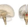 デブを神経科学から考える