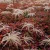 秋色パレット   神々の遊ぶ庭の秋