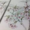 日本画 簡単な仮張りの方法。 其の1