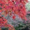 万博記念公園の紅葉で現実逃避