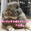 (●°◇°●)【リゼロ23話☆感想】バルス勤勉化!!