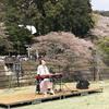 桜と石橋まつり2018