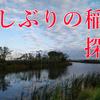【稲敷】久しぶりの稲敷探検