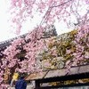 働き過ぎの人が 京都 大原 三千院を訪れるべき6つの理由