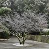 王龍寺の雪