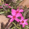 花々の故郷への祈り