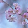 🌸上野公園で桜が咲いてるか偵察に行きました!