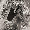 【号外】野鳥写真展「100年前にカワセミを撮った男」を観て来ました。  ~有楽町朝日ギャラリーにて~
