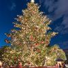 恵比寿ガーデンプレイスのウィンターイルミネーションとウェスティンホテルのクリスマスツリー