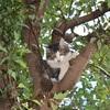 木登り大好きチョモ