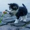 猫との暮らしは癒やしの毎日