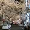 東京桜便り━八重洲━