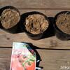トマトの種まきから1週間、ベランダ菜園の雑草たち、フラサバソウ