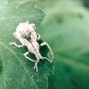 iPhoneによる虫や花のマクロ映像制作 with Moment Macro Lens