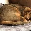 【ハロウィンジャンボ宝くじ】本日発表!我が家の招き猫パワーはいかに。