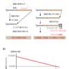 【医学部編入】生命科学講義・DNAの複製③ ~テロメア~