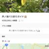 【Swift】MapView で Map を表示するだけの記事