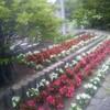 花達の行進