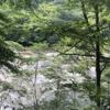 群馬へGo‼︎【東洋のナイアガラ!吹割の滝】
