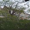 桜めぐり(4) 花より団子の花見客…